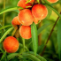 popovpetrich-peaches