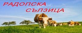 rodopska_silzica