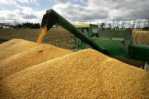 20631-цени на зърното
