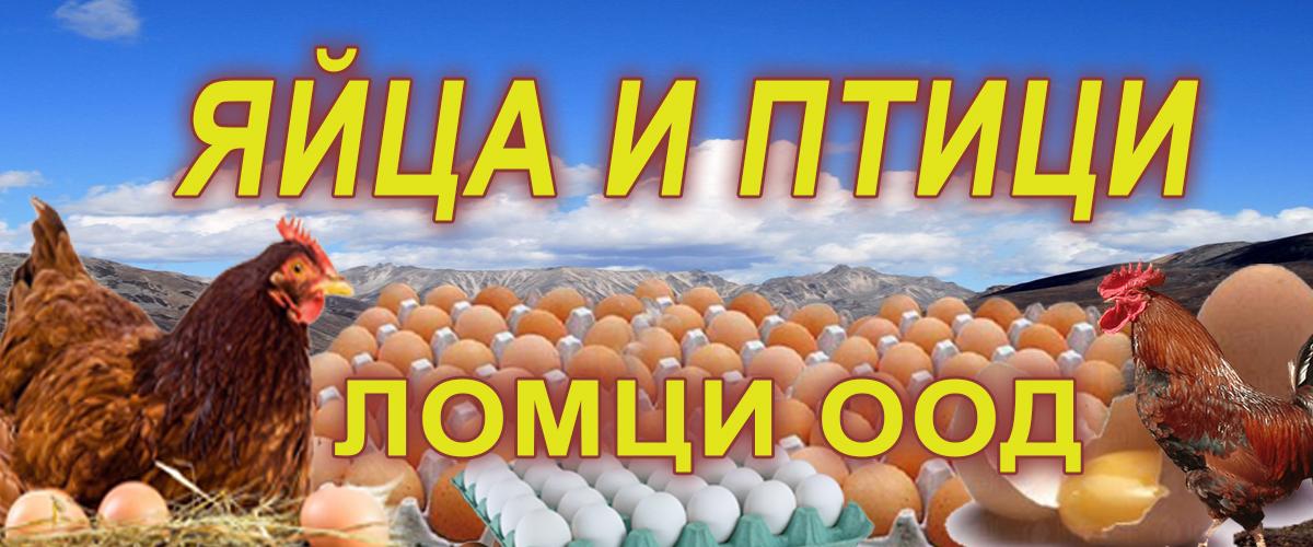 -банер-Ломци-ООД-1